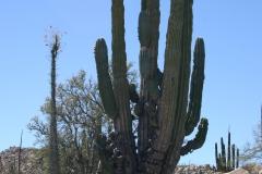 NavaN-baja california cattedrali nel deserto